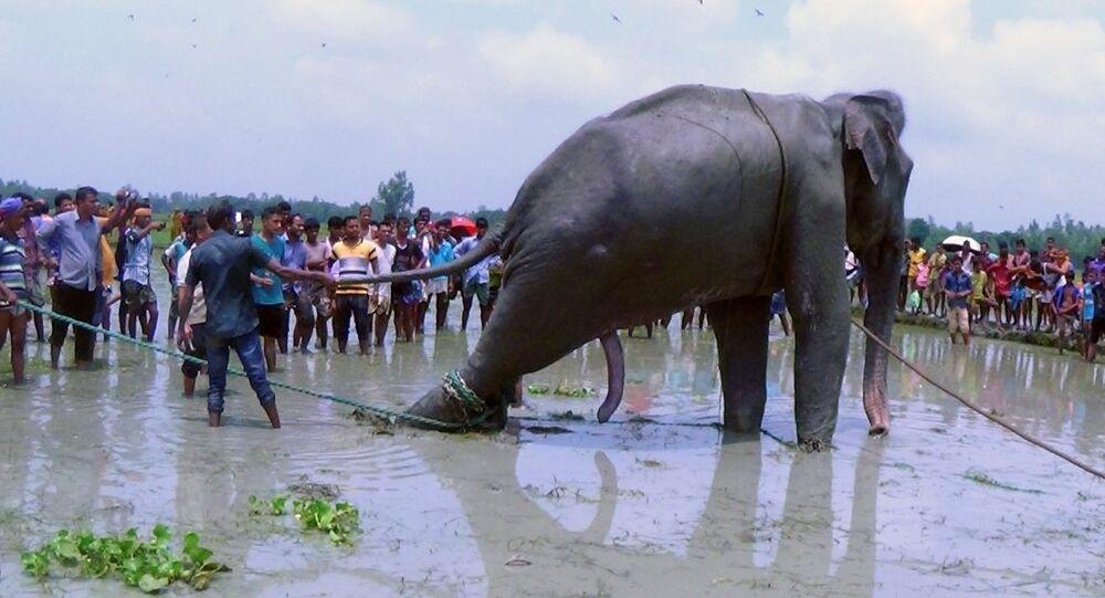 Bangladesh fil