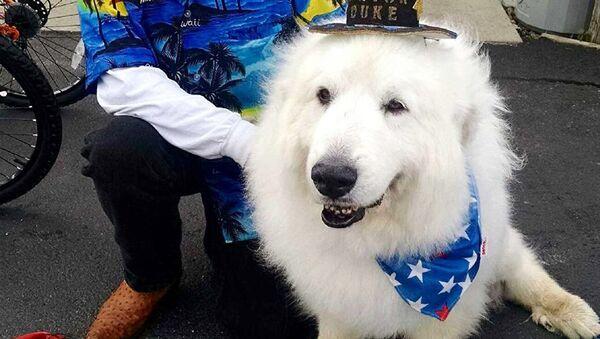 Belediye başkanı köpek Duke - Sputnik Türkiye