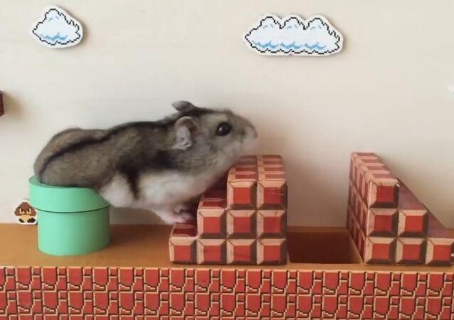 Hamster Süper Mario görev başında