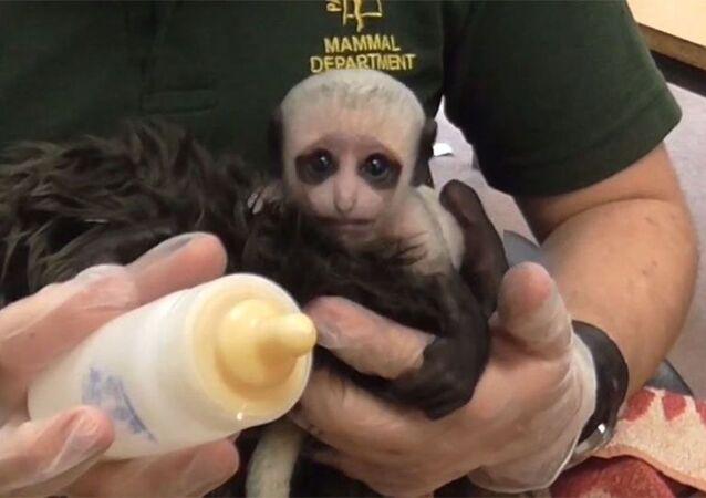 Lord Voldemort'a benzeyen maymun