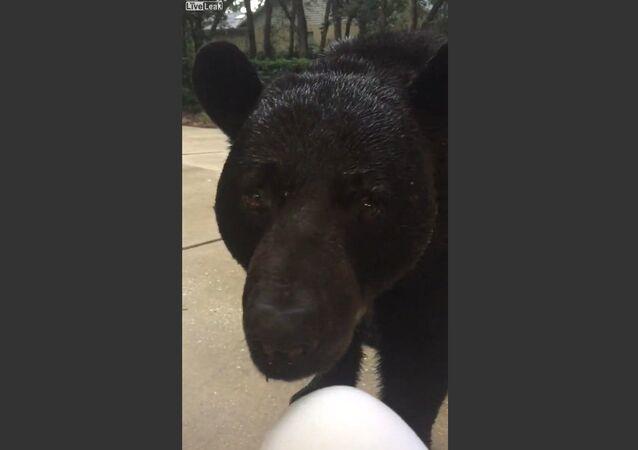 Evin bahçesinde telefonla oynayan kadını siyah ayı ziyarete geldi