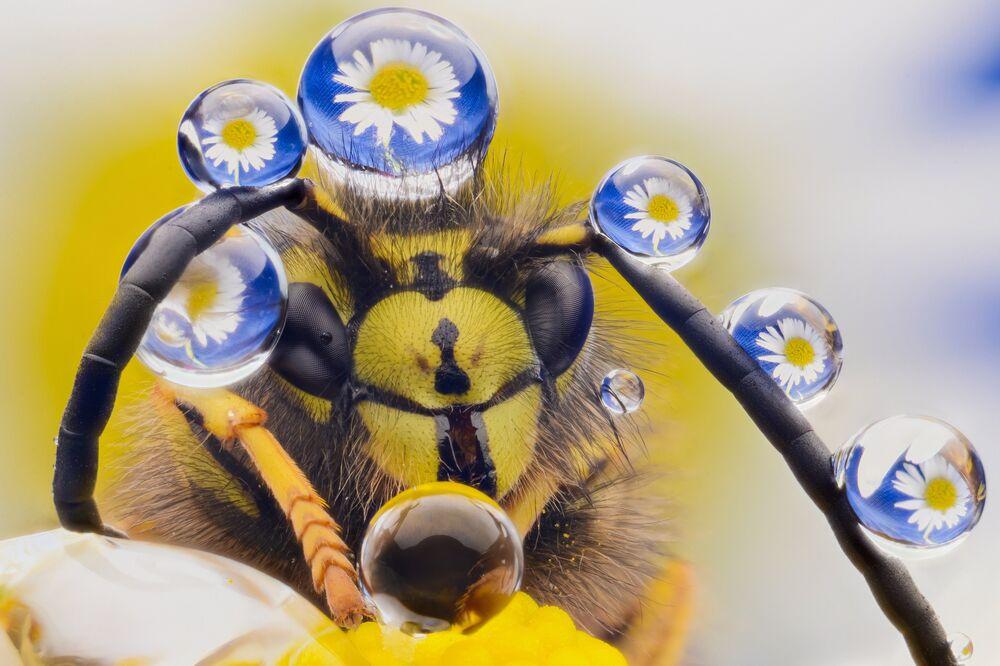 Yeni Zelanda'da süslü bir arı