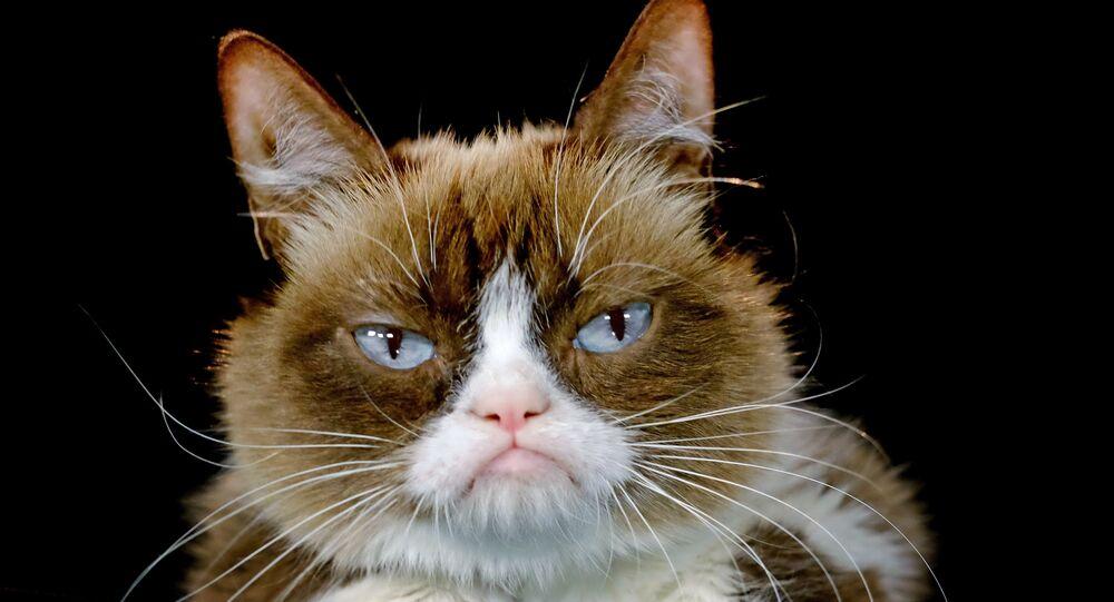 Kedi / Grumpy Cat