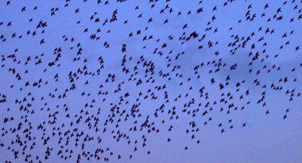 Bird flock