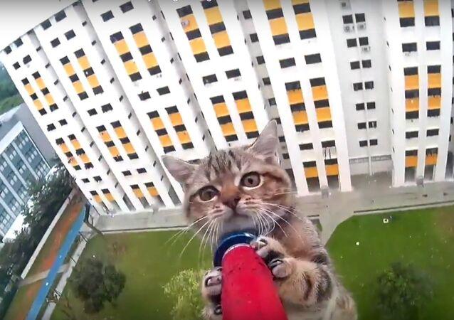 Meraklı kedi yavrusu, apartmanın 12. katından kurtarıldı