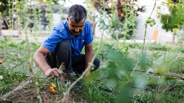Midilli'deki sığınmacılar, ada halkına teşekkür etmek için sebze yetiştiriyor. - Sputnik Türkiye