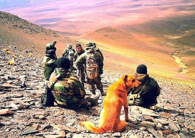 Arjantin ordusunda görevli köpek 'Çavuş Cabo'