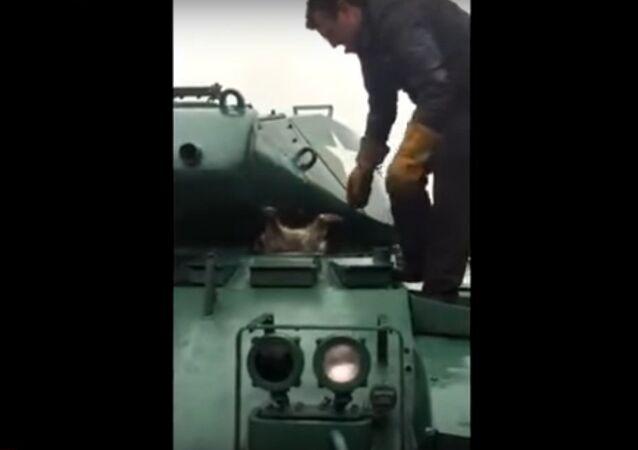 Rakun tank içinde sıkıştı