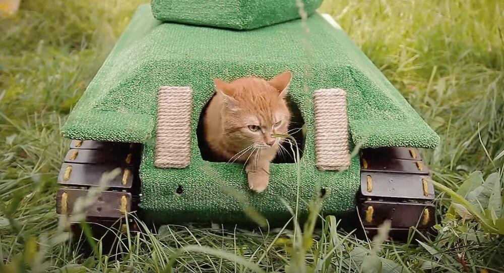 Kedi tankı
