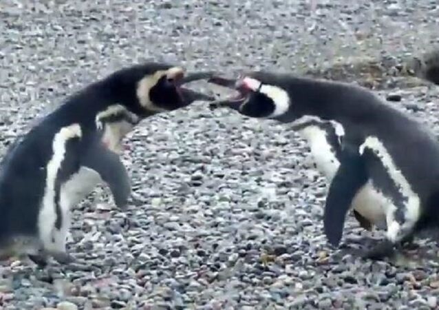Penguenlerin savaşı