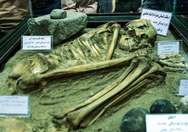İran'da 7.500 yaşındaki iskelet sergilendi