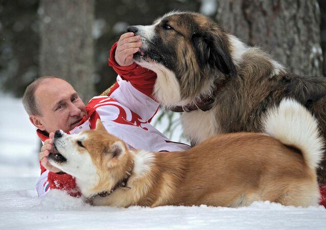 Rusya Devlet Başkanı Vladimir Putin köpekleri Buffy (üstte) ve Yume (altta) ile birlikte