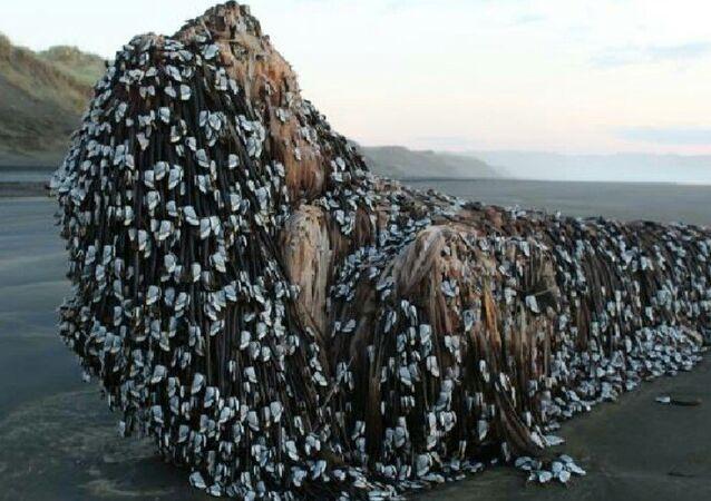 Yeni Zelanda'da denizden çıkan 'garip nesne'
