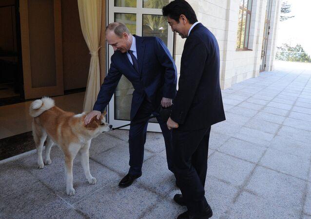 Putin köpeği Yume'yi Japonya Başbakanı Şinzo Abe'ye tanıtıyor