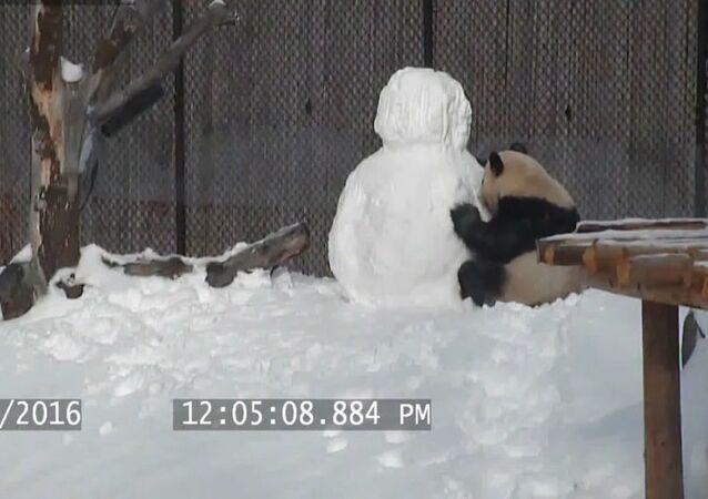 Panda - kardanadam - VİDEO