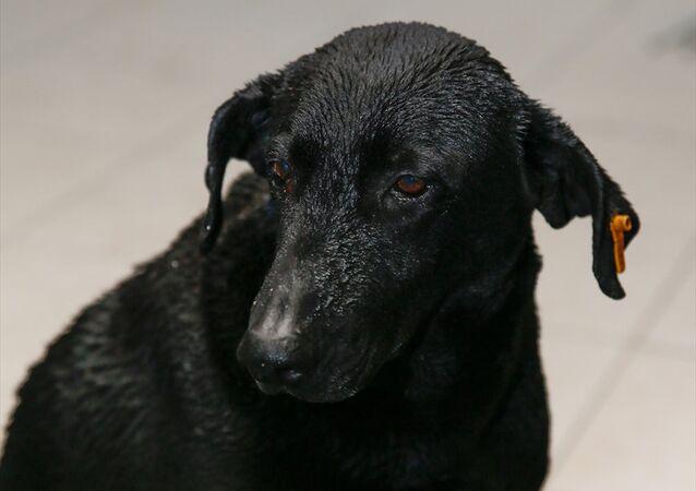 İzmir'deki saldırıda hayatını kaybeden polis memurunun sahiplendiği sokak köpeği Zeytin
