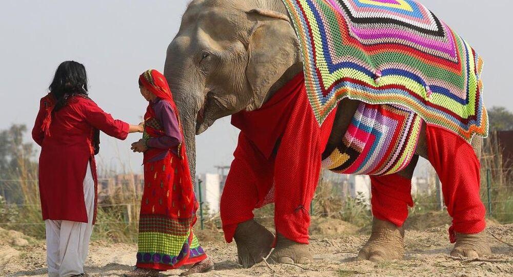 Hindistan'da filler kazakla dolaşıyor
