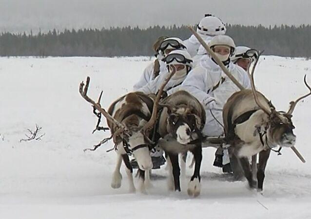 Rus deniz piyade birlikleri köpek ve geyik kızaklarını kullandı