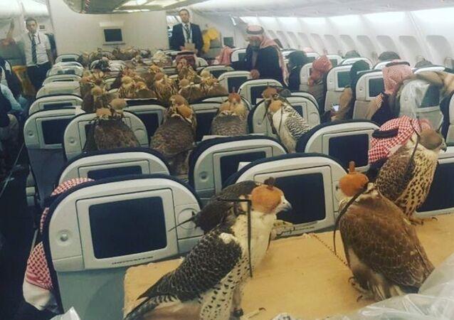 av şahinleri yolcu uçağında