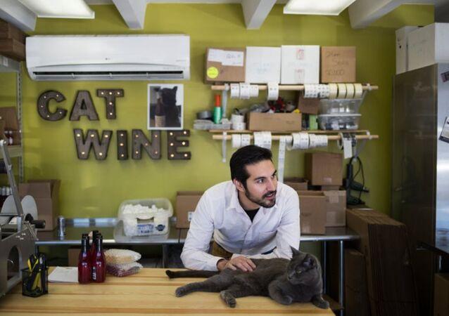 kedi şarabı