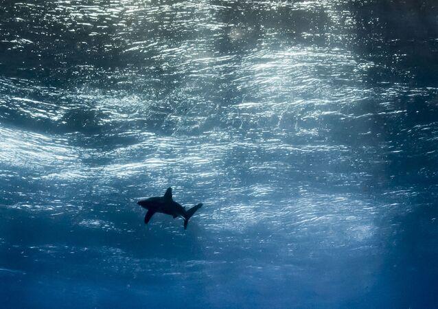 Yılın en çok ümit vaat eden fotoğrafı' dalında 'Okyanus gökyüzü' isimli fotoğrafıyla katılan Arjantinli Horacio Martinez birinci oldu.