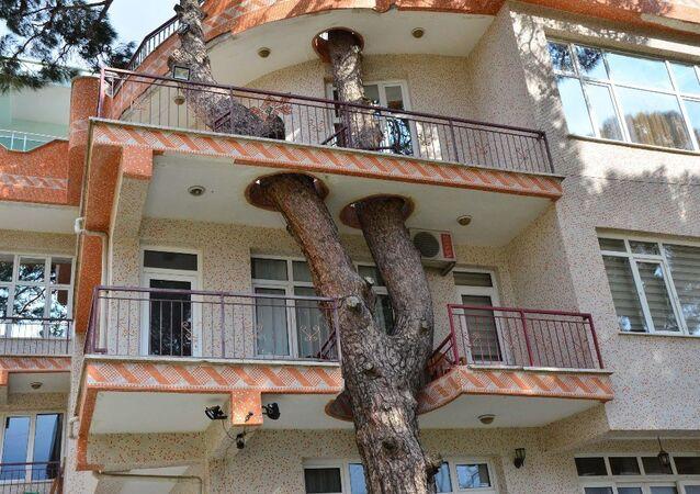 Örnek ağaç sevgisi
