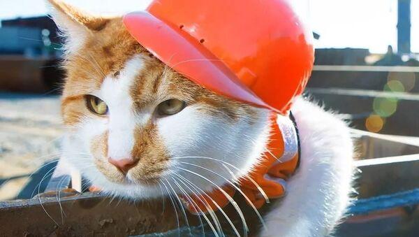 Kedi Mostik - Sputnik Türkiye