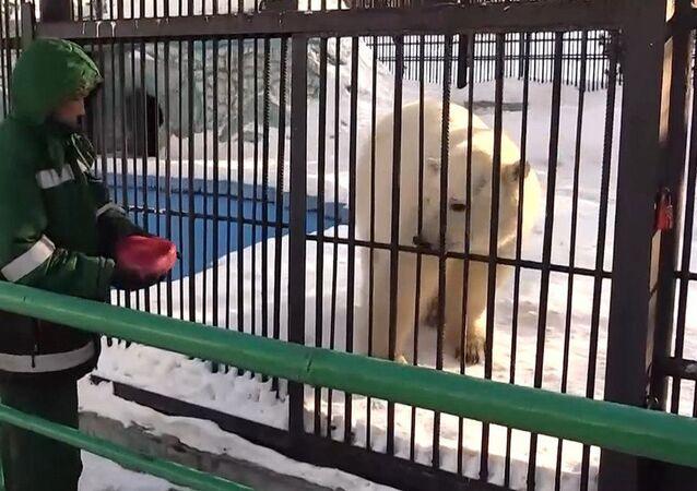 Krasnoyarsk kentindeki hayvanat bahçesi