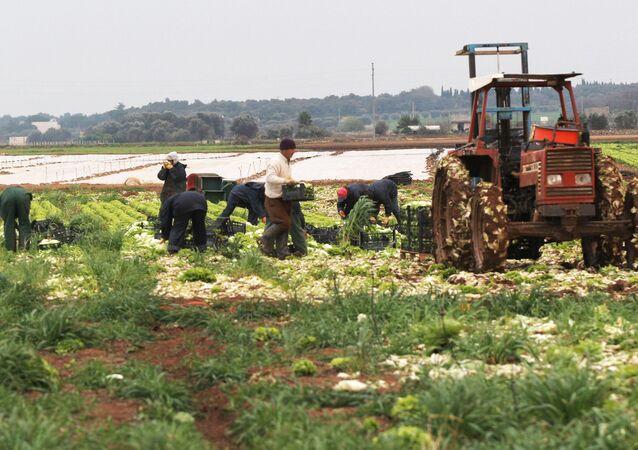 İtalya'da tarla işçileri