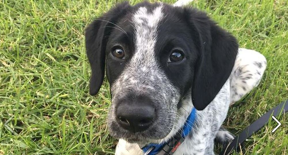 Yeni Zelanda polisi, Grizz adındaki köpeği vurdu
