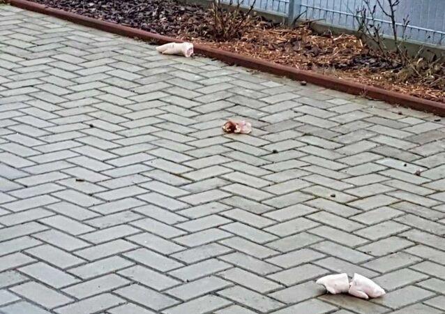 Bremerhaven'de camiye domuz parçaları atıldı