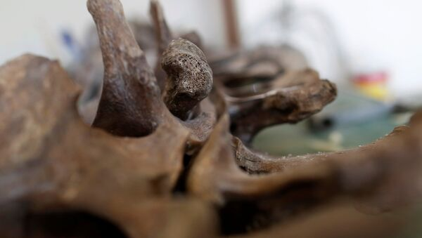 Mamut fosili - Sputnik Türkiye