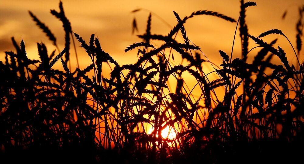 Türkiye'nin Rusya'dan vergisiz buğday ithalatı
