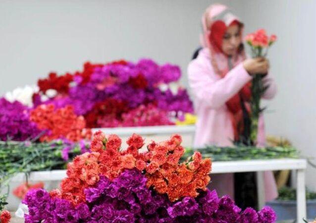 çiçek - çiçekçilik