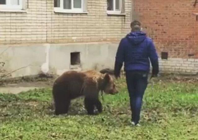 Rusya'da ayısını gezdiren genç