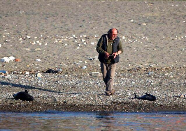 Zonguldak'ta öldürülen yunuslar