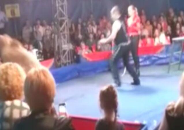 Ukrayna'da sirkte ayı vatandaşlara saldırdı