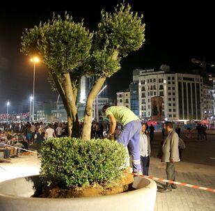 Taksim meydanı ağaçlandırma