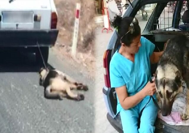 Muğla'da köpeğe eziyet