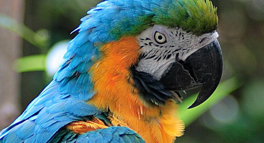 Ratted Out: Kuwaiti Man's Affair With Maid Exposed by Pet Parrot
