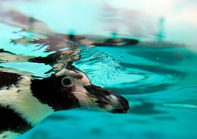 Hayvanat bahçesinde 'penguen katliamı'