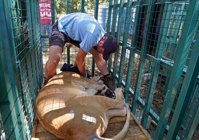 Halep Hayvanat Bahçesi'nden yaban hayvanlarının nakil işlemi tamamlandı