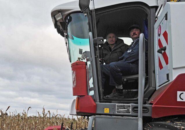 Putin, Rodina tarım işletmesinde mısır toplama çalışmalarına katıldı.