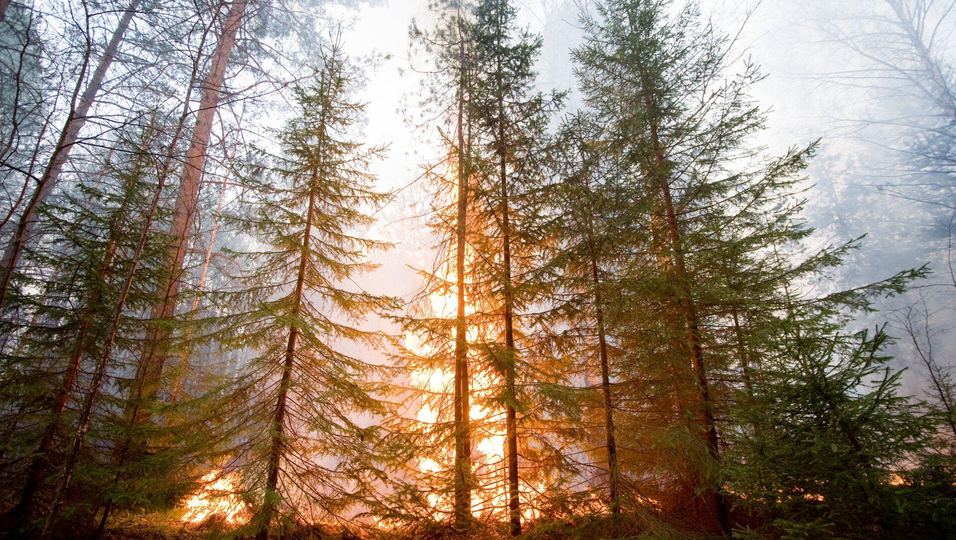 Orman yangını - Sputnik Türkiye, 1920, 30.07.2021
