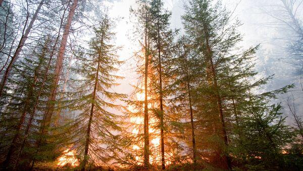 Orman yangını - Sputnik Türkiye
