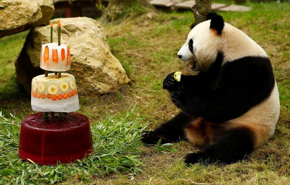 Hollanda / Panda / Xing Ya