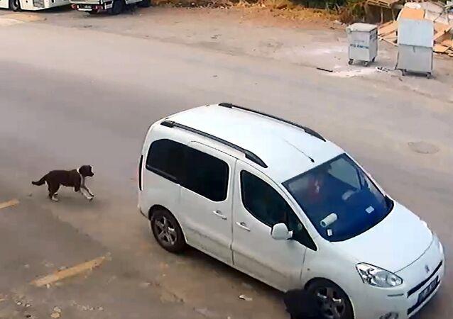 Antalya'da bir sürü köpeği bilinçli bir şekilde ezerek öldürdü