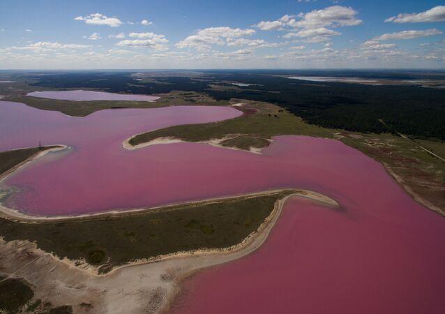 Altay'ın Mikhaylovskoye bölgesindeki acı-tuzlu 'Pembe göl'