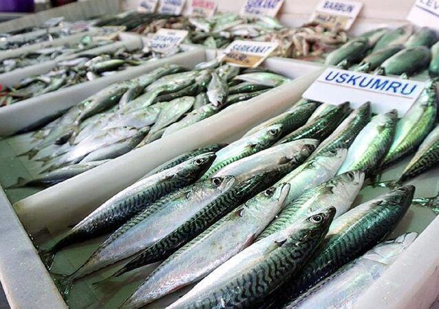 Uskumru, balık