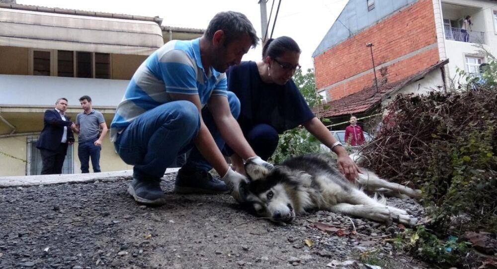 Evinin karşısına tuvaletini yapan köpeği ve sahibini vurdu